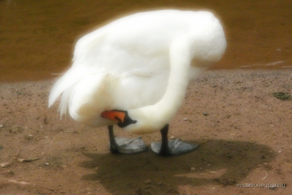 Preening the tail feathers by missmoneypenny