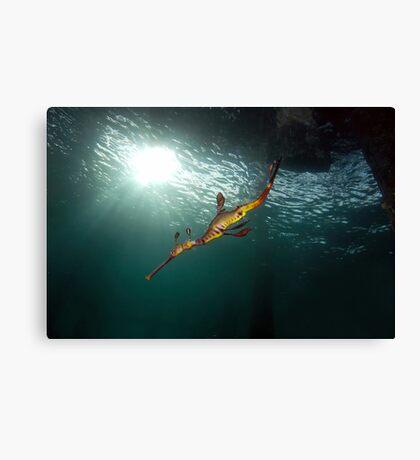 Seadragons & Sunshine Canvas Print