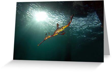 Seadragons & Sunshine by MattTworkowski