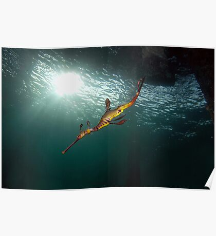 Seadragons & Sunshine Poster
