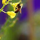 Hungry Bee by Debbie Steer