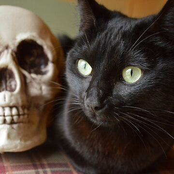 Black Cat With Skull by mydragonzeatyou