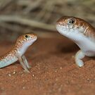 Night skink - mum and baby by Stewart Macdonald