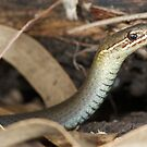 Marsh snake by Stewart Macdonald