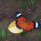 Fly,Butterfly,Fly by Tat77