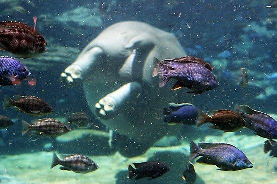 hippo bottom by VVVenus