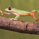 Strollin tree frog by Angi Wallace