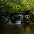 Hareshaw Linn 1 by Angi Wallace