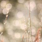 Sun Delight by Olivia Plasencia
