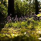Bluebells and sunshine by Angi Wallace