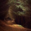 Forest light by Angi Wallace