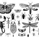 Bug Board by Aimee Cozza