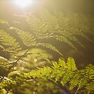 Sunshine amongst the ferns by Angi Wallace