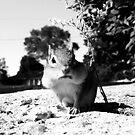 Chipmunk Black&White by TLWhite
