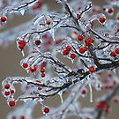 Icy Winter by LizzieMorrison