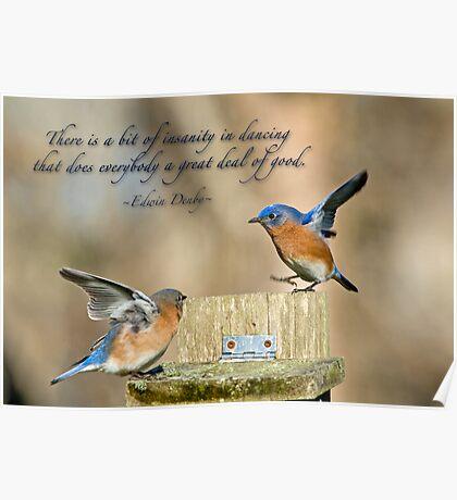 Dancing Bluebirds Poster