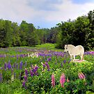 Spirit Pony in the Lupine by Wayne King