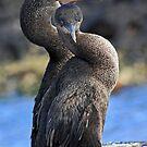 Cormorant Serenade by Sue  Cullumber