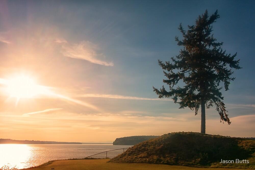 Sunset Tree - Chambers Bay by Jason Butts