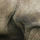 Armpit of a Rhino by Yampimon