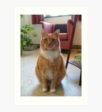 Picture Puurfect Art Print