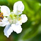 Ladybug by Janine  Hewlett
