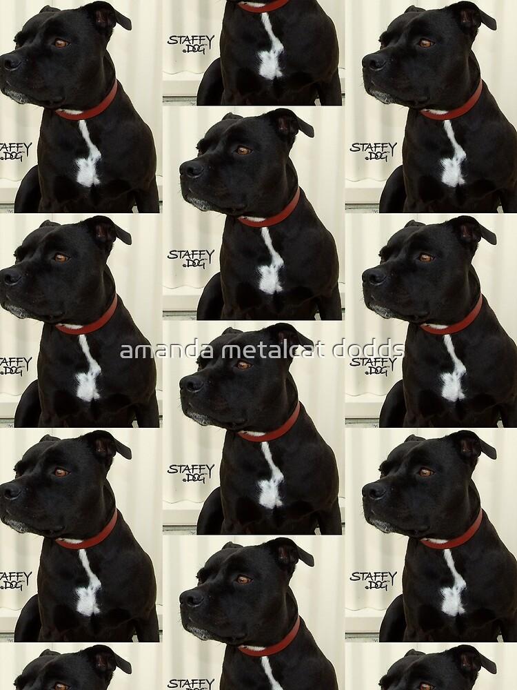 Staffy Dog by metalcat