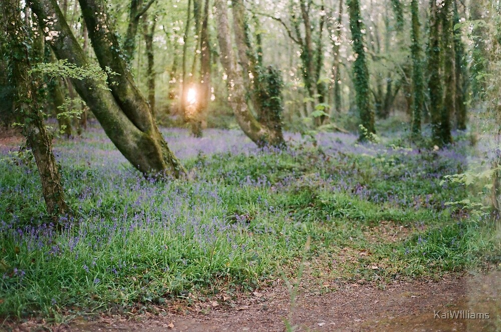 Bluebells by KaiWilliams