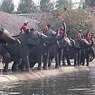 Thai Elephants Entertain. by Bev Pascoe