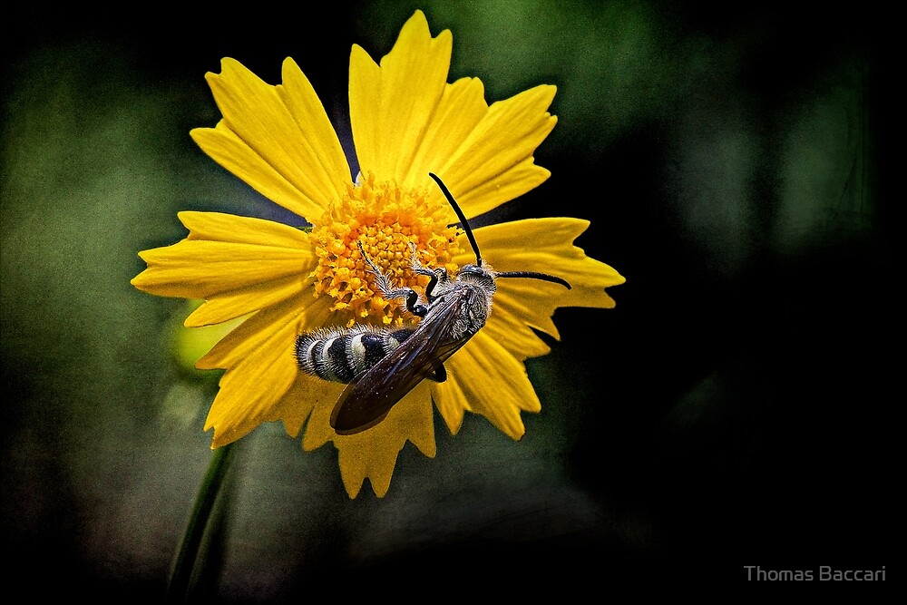 Flower and the Bee Textured by TJ Baccari Photography