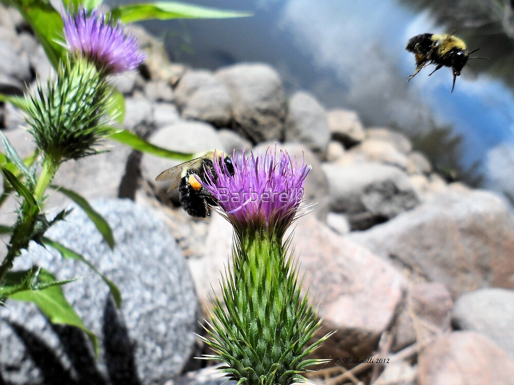 Buzzy Bees Amazing Day by Barberelli
