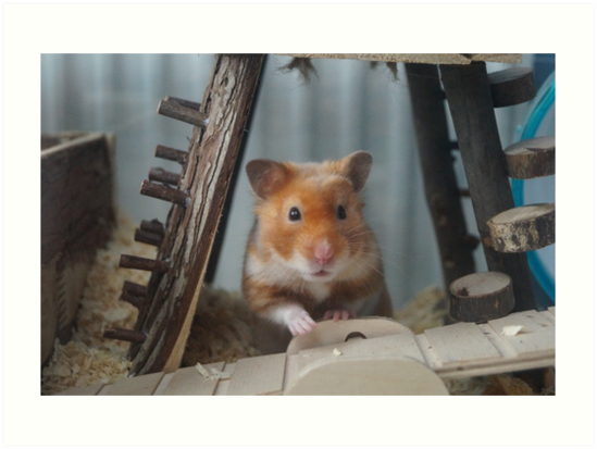 Cute Posing Syrian Hamster  by NevandtheTurnip