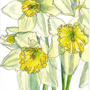 Daffodils watercolour painting by esvb
