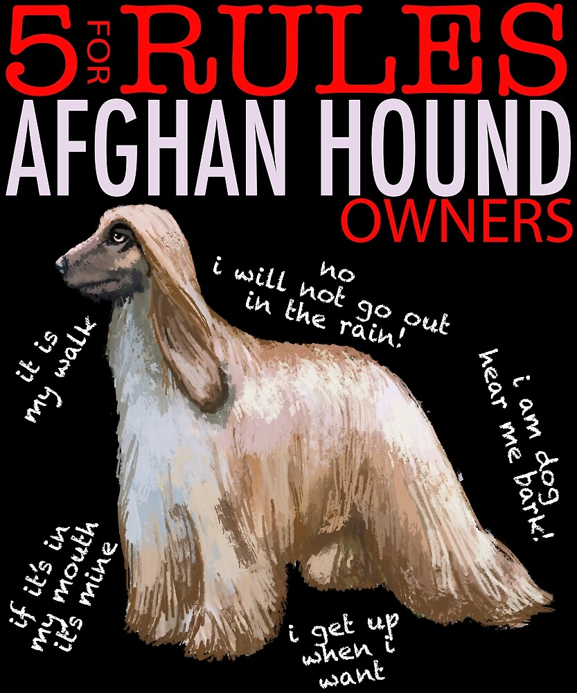 5 Rules for Afghan Hound Owners by MichaelRellov