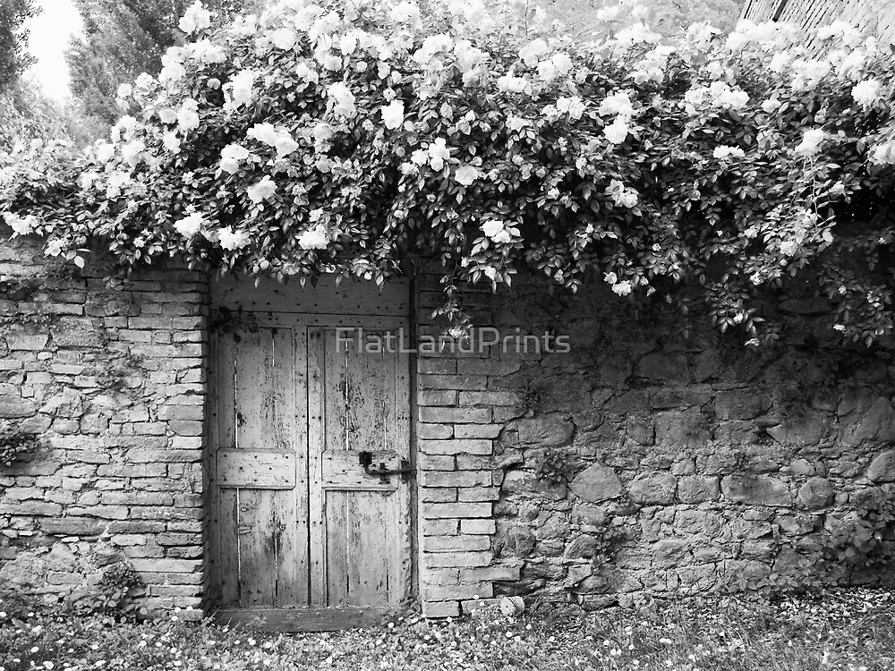 Old Italian wall with roses by FlatLandPrints