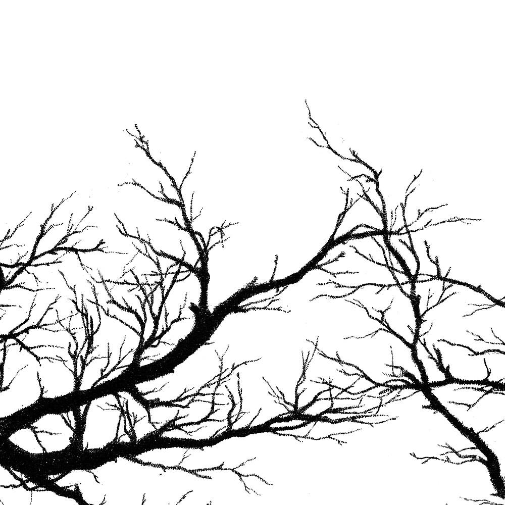 black branches by Miranda Pastor