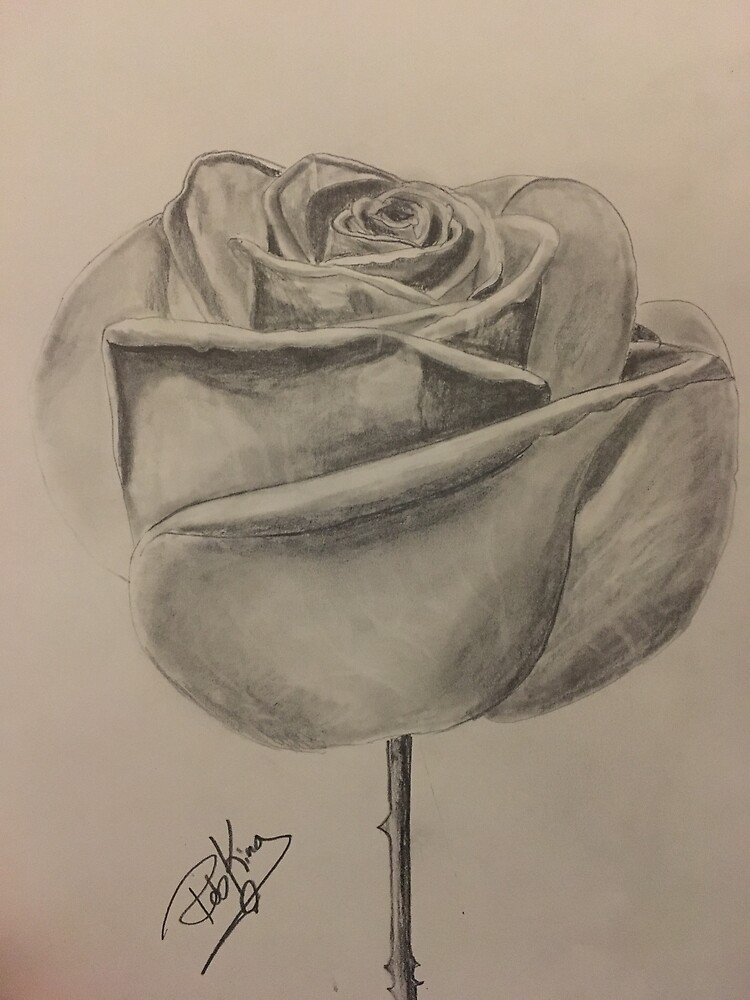 Rose Drawing by HeartOnPaper