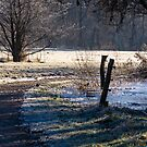Winter Path by Carola Gregersen