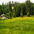 Sequoia Meadow by HeavenOnEarth