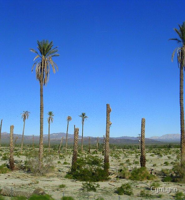 Dead Palms by CynLynn