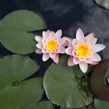 Water lilies from above by Graphic-T