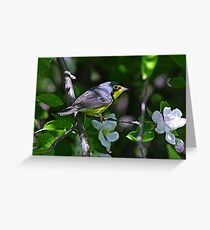 Canada Warbler Greeting Card