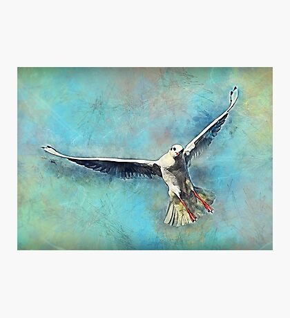 Gull bird Photographic Print