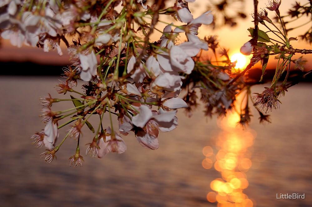 Sunset on the tidal basin by LittleBird