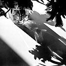 Flowers and Shadows by Paul Scrafton