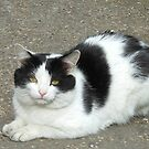 White Cat with Black Patches von BlueMoonRose