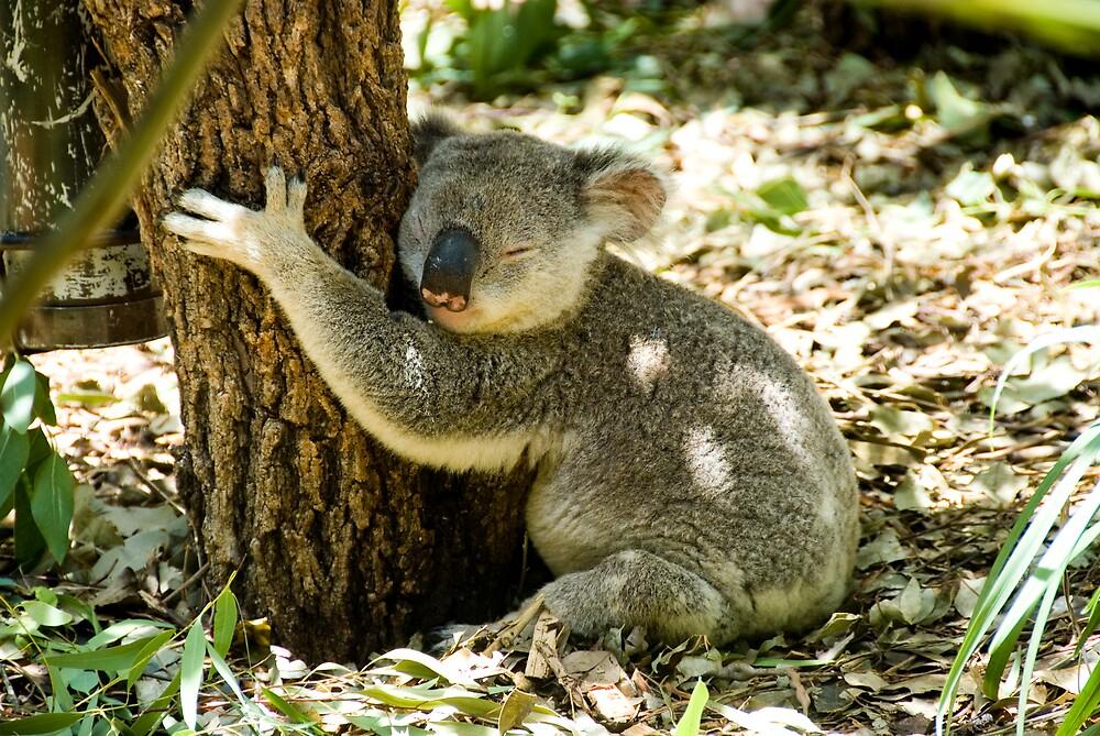 Koala lazing off