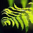 Meditation in Green by BettinaSchwarz
