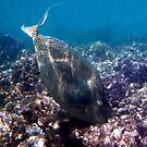 Bluespine Unicornfish Red Sea by hurmerinta