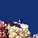 Gorgeous Red Sea World 4 by hurmerinta